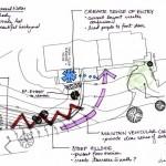 تحلیل سایت ( بایدها ونبایدها ) - site analysis 17